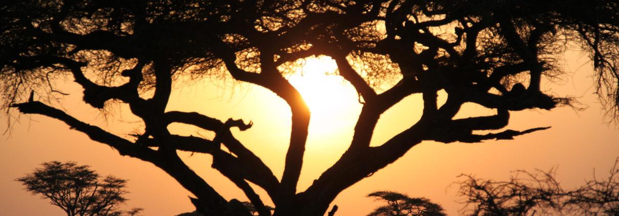 Kenya, Yoga e Safari