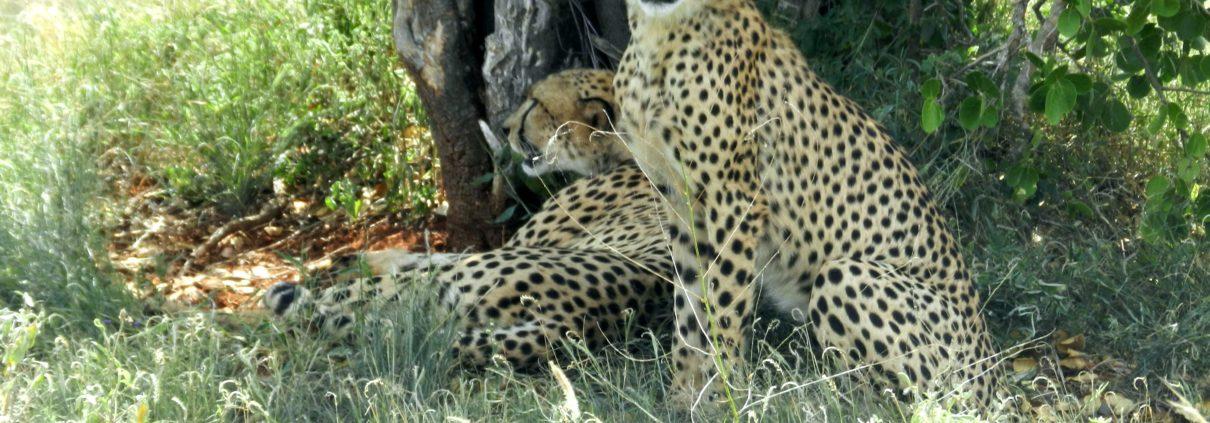Viaggio Yoga e Safari in Africa, Kenya